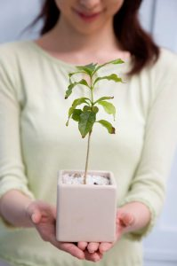 植物の生長